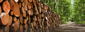 timber-regulations